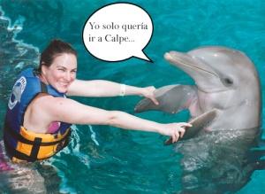 DelfinDespistado